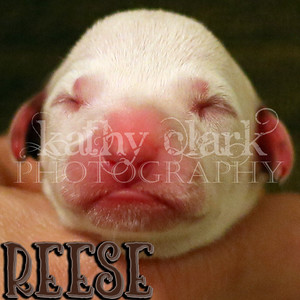 PL3A0162 Reese