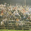 the crowd at Lancaster Speedway