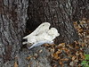 an angel rests at the base of the tree