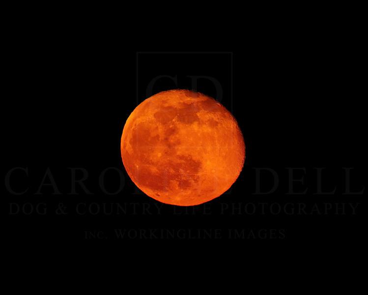 red moon-gigapixel-width-3600px