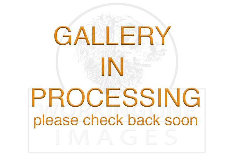 gallery processing