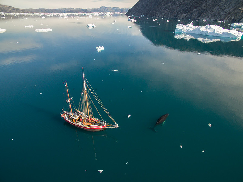 Expedition sailboat Arktika has close encounter with a small humpback whale. Sermilik fjord, Ammassalik region, east Greenland.