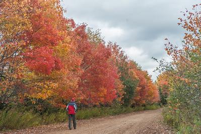 Roadside autumn foliage at Baddeck Forks in Cape Breton