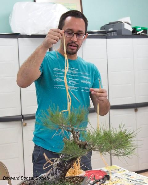 Preparing pre-soaked raffia for wrapping a branch