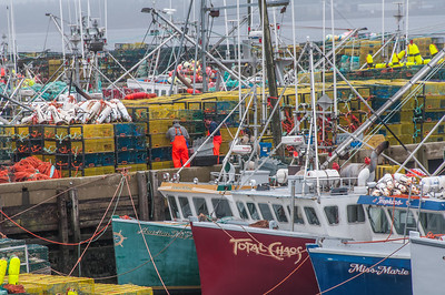 "Lobster boats and gear congest the warves at Dennis Point in Lower West Pubnico as they load up for ""dumping day"" and  the start of the lobster fishing season in southwestern Nova Scotia"