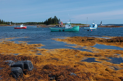Colourful seaweed contracts with the colours of fishing boats at Blue Rocks, a southshore fishing community near Lunenburg.