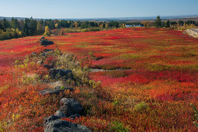 Scarlet blueberry fields dominate the landscape on the Glooscap Trail in Cumberland County at East Mapleton