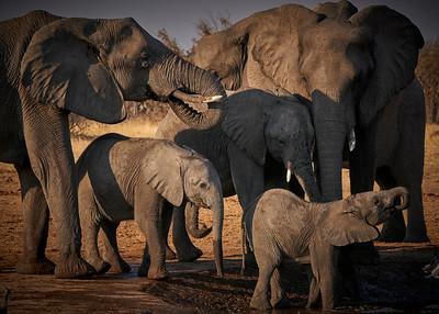 "Elephant (Katima Mulilo / Zambezi / Namibia - 18°38'6.3"" S 24°5'41.76"" E)"