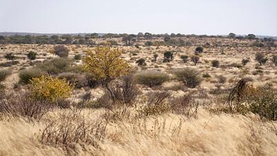 """Landscape (Rakops / Central / Botswana - 21°20'42.96"""" S 23°23'32.94"""" E)"""