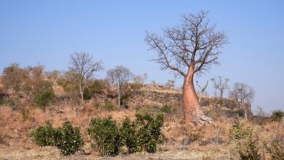 """Landscape (Katima Mulilo / Zambezi / Namibia - 18°34'23.759"""" S 24°5'34.08"""" E)"""