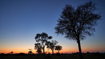 """Landscape (Maun / North-West / Botswana - 19°7'25.8"""" S 23°52'10.8"""" E)"""