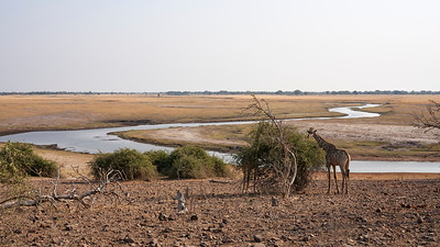 "Landscape -Giraffe (Kasane / North-West / Botswana - 17°53'54.9"" S 24°44'58.2"" E)"