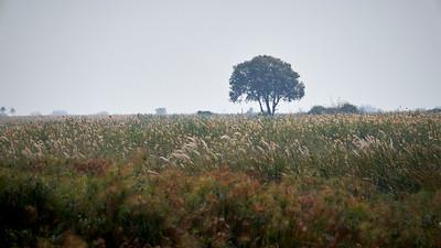 """Landscape (Katima Mulilo / Zambezi / Namibia - 18°17'29.28"""" S 23°54'49.2"""" E)"""