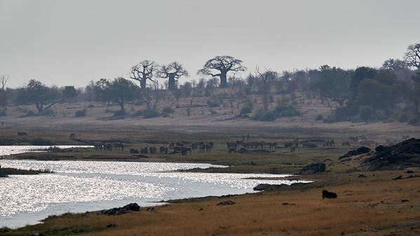 """Landscape (Kasane / North-West / Botswana - 17°52'37.44"""" S 24°47'34.319"""" E)"""
