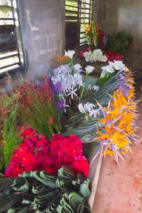 Fleurs de Cuba