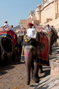 Le fort d'Amber. Le matin, de nombreux éléphants gravissent inlassablement la rampe d'accès principale pour faire gagner l'édifice aux touristes (il faut 10 mn à pied et 1 mn en taxi). Attention, contrairement à d'autres endroits où les éléphants reçoivent de bons traitements, dans les temples par exemple, ici ils ne sont guère considérés et une association locale s'est montée pour que soit construit un bassin où ils puissent aller se baigner, un éléphant ayant besoin chaque jour de 250 litres d'eau par voie directe ou par imprégnation lors du bain ou de l'arrosage au jet... Nous avons boycotté et sommes montés à pied. À Jaipur, Vétérinaires sans frontières a déjà apporté des améliorations considérables au bien-être des éléphants d'utilité. L'ankush (aiguillon) de métal, une baguette pointue qui servait à guider et à faire obéir les éléphants, a été remplacé par une baguette de bambou à pointe émoussé ou tout simplement banni. Au fort, le nombre de touristes autorisés a également été réduit à deux à la fois, et un hangar ombragé a été construit pour les éléphants au repos.