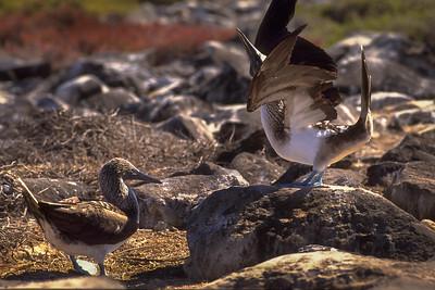 Galapagos 1996