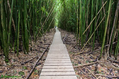The Path in a Bamboo Forest