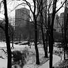 morning walk central park