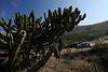 FIA World Rally Championship 2012 – MEXICO RALLY - Leon / Guanajuato<br /> SHAKEDOWN<br /> Photo: RICHARD BALINT / TOPSPEED PHOTO AGENCY