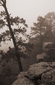WRC  Scenery Outside Morning Fog  Photographer: Todd Johnson