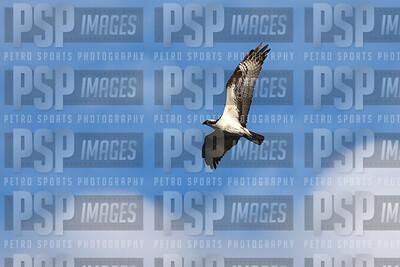 PSP_8822