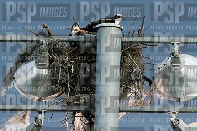 PSP_6299