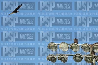 PSP_0156