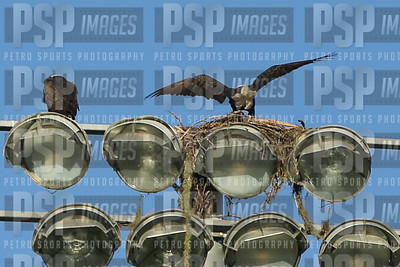 PSP_0159