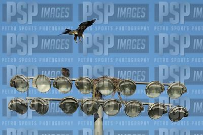 PSP_0158