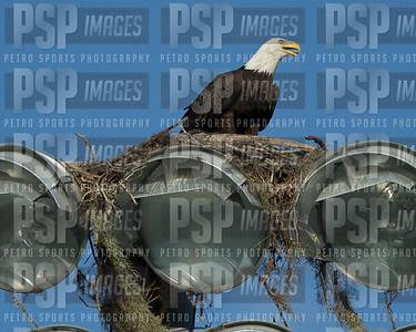 PSP_1464