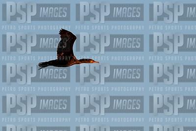 PSP_9463