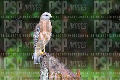 PSP_0755