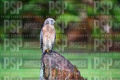 PSP_0768