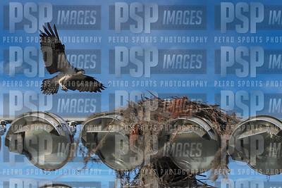 PSP_2908