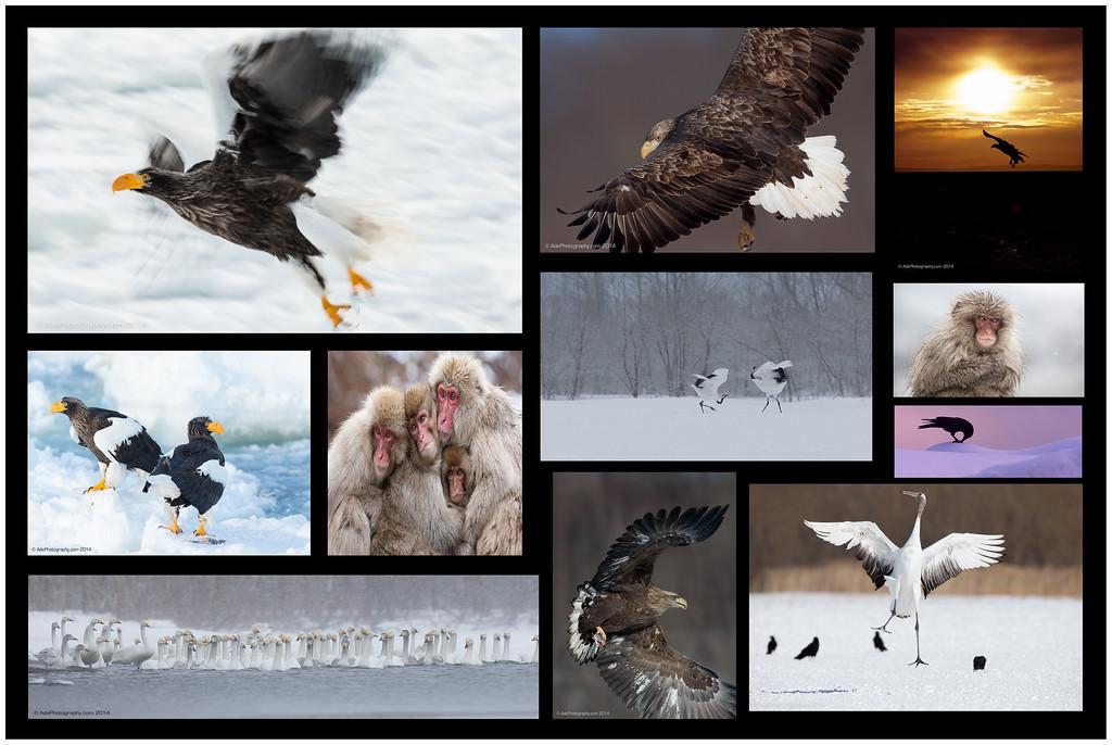 Wild Hokkaido