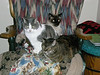 The WTR Cats! Sammie (in front) Babe (middle) and Razz (in back)