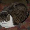 Cheryl's kitty was as big as my 12# turkey.