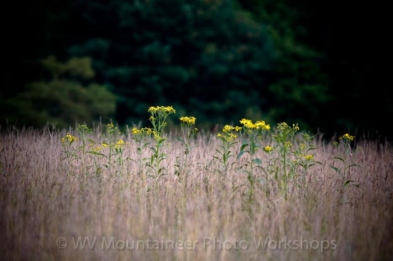 Flowers - Loops Road West Virginia