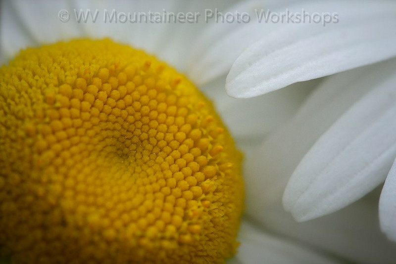 Flower - Snow Shoe West Virginia