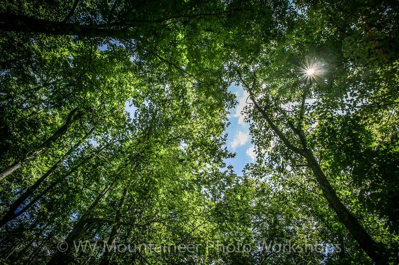 Trees - Hawks Nest State Park West Virginia