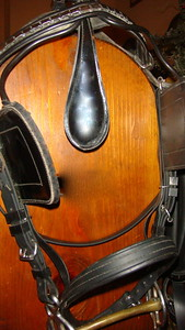 bridle w/shaped leather crown