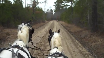 Canter Practice