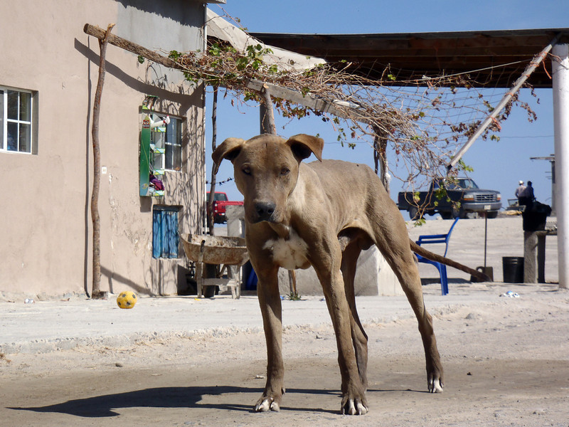 March 2: Local resident of a taco restaurant in the desert on Hwy 1 in Baja California Sur.