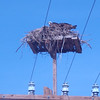 Adolfo Lopez Mateos, March 2: Osprey nest.