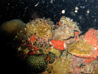 WWII Wreck Iro Maru (Palau 2011-01-19 Night dive)