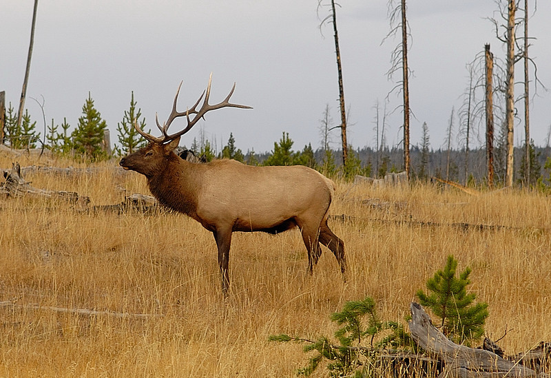 Yellow Stone National Park<br /> Photo # 91