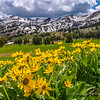 Gros Ventre Range and Balsamroot