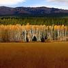 Gread Teton National Park  <br /> Photo # 82