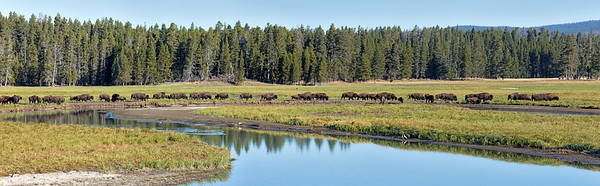 8407 Buffaloes